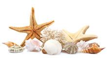 Seashells On Sand, Isolated On...