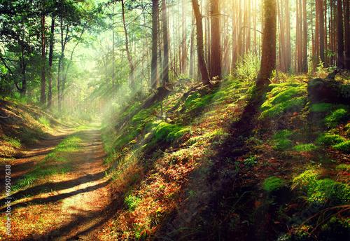 pieknej-sceny-jesieni-mglisty-stary-las