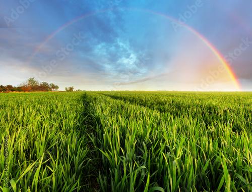 Foto op Plexiglas Platteland Spring Green field