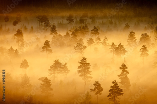 Canvas Prints Orange Foggy Swamp Landscape