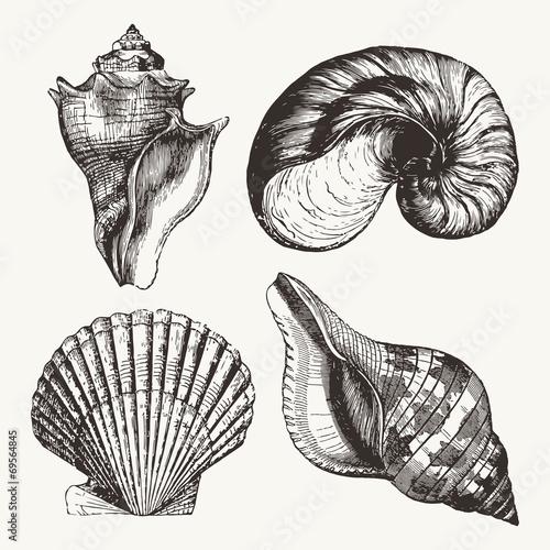 Fotografie, Obraz  Seashells