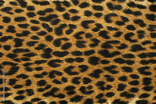 Poster Leopard Close up leopard spot pattern