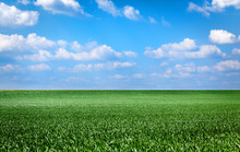 Landscape With Green Grass Field And Blue Sky