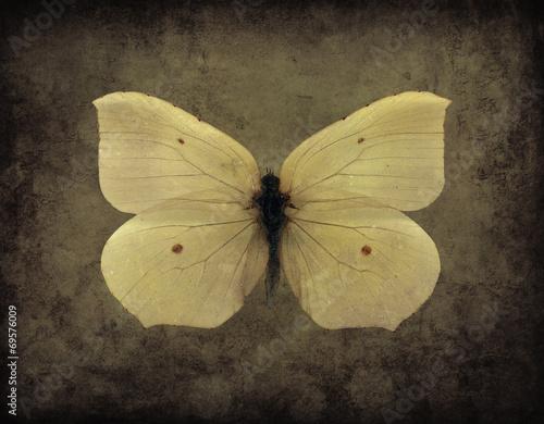 Foto auf Leinwand Schmetterlinge im Grunge Vintage Grunge Butterfly