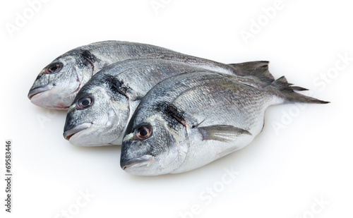 Poster Vis Dorado fish isolated on white background with clipping path