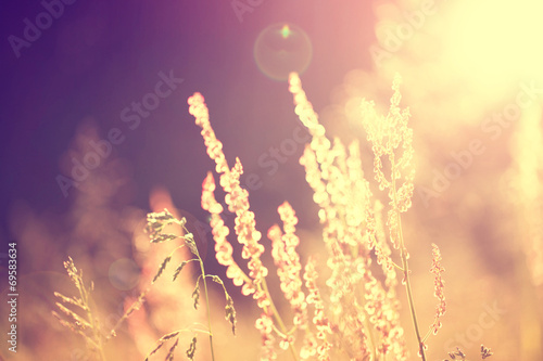 Foto op Plexiglas Retro Golden blurry vintage meadow