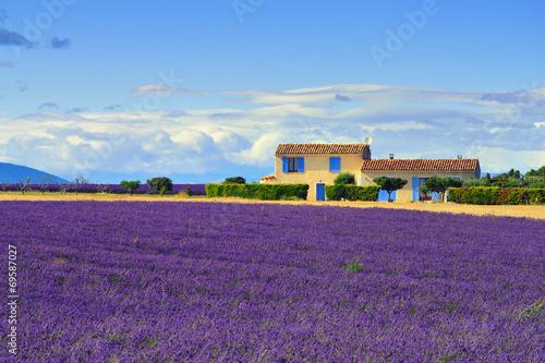 Foto op Aluminium Snoeien Provence rural landscape