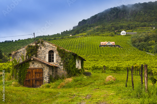 Photo  Winery, vineyard landscape in Hungary.