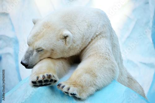 Papel de parede  Спящий медведь.