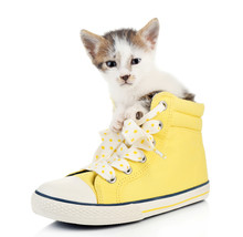Cute Little Kitten In Shoes Isolated On White