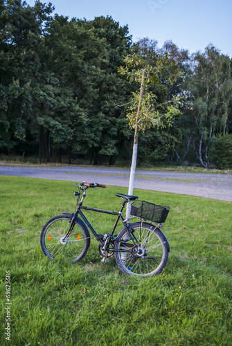 Foto op Aluminium Picknick Bike leaning against a tree