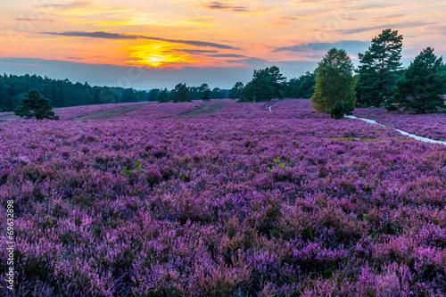 Spoed Foto op Canvas Snoeien Lüneburger Heide, Sonneuntergang