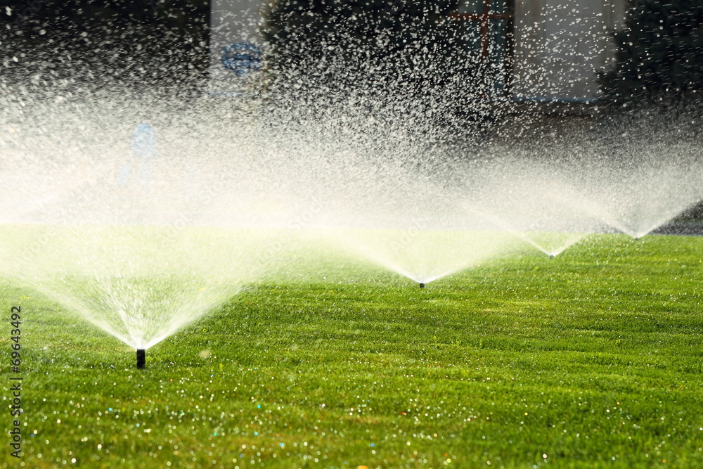 Fototapety, obrazy: garden sprinkler on the green lawn