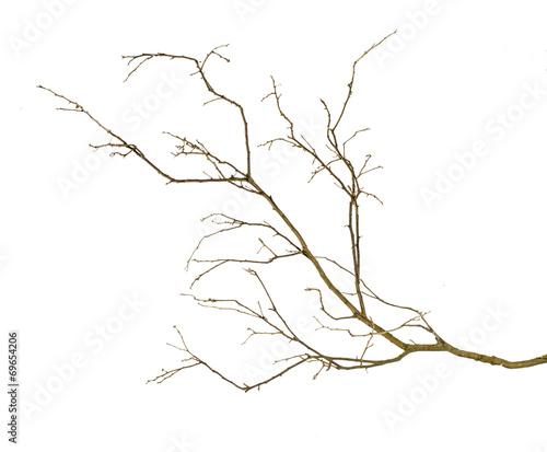 Photo dry branch