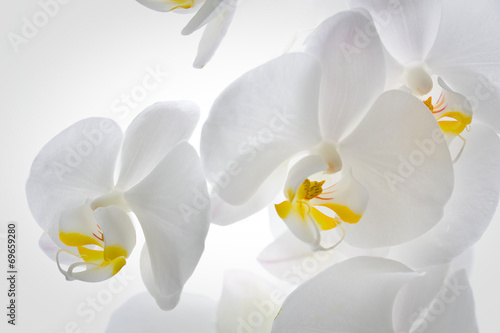 Foto op Canvas Orchidee Detail of orchid flowers.