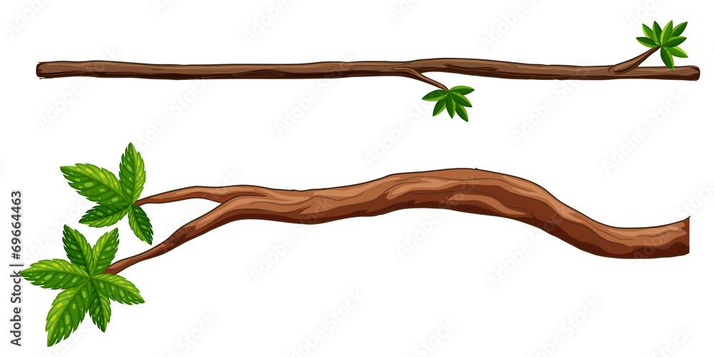 Fototapeta Branches
