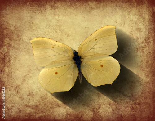 Foto op Canvas Vlinders in Grunge Grunge Butterfly with Shadow