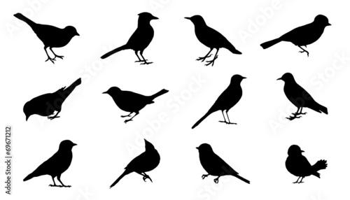 Photo bird2 silhouettes