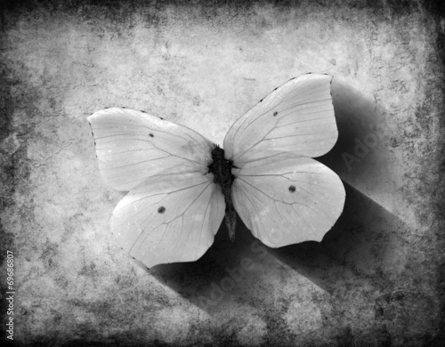 Garden Poster Butterflies in Grunge Grunge Butterfly with Shadow