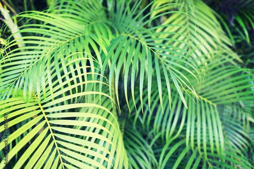 zblizenie-lisci-palmy