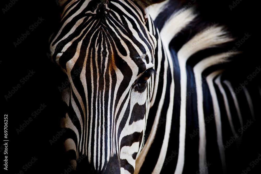 Fototapety, obrazy: A Headshot of a Burchell's Zebra