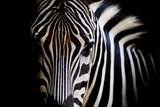 Fototapeta Zebra - A Headshot of a Burchell's Zebra