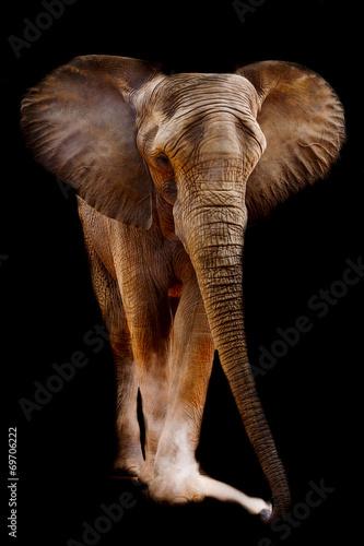 Foto op Aluminium Olifant African elephant
