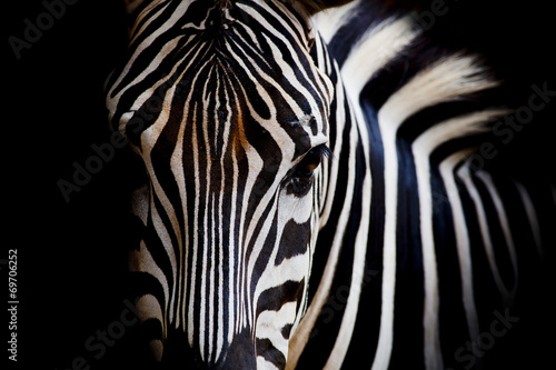 Stickers pour portes Zebra A Headshot of a Burchell's Zebra