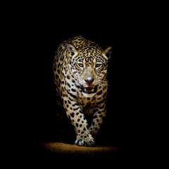 Panel Szklany Eko Leopard portrait