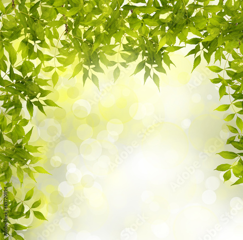 Green branch of a tree on abstract background with bokeh effect