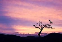 El Arbol Del Cuervo Negro