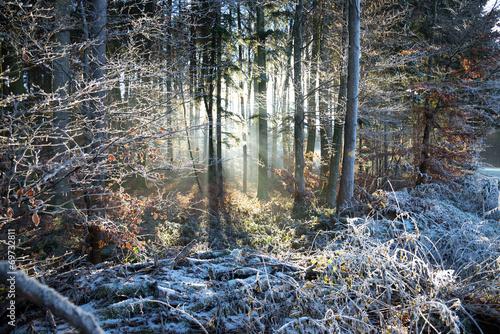 Sonnenstrahlen und Frost
