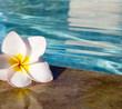 flower on pool