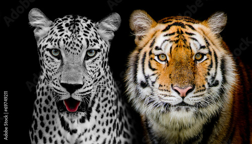 Fotomurales - Straight face of Leopard and Tiger. (And you could find more ani