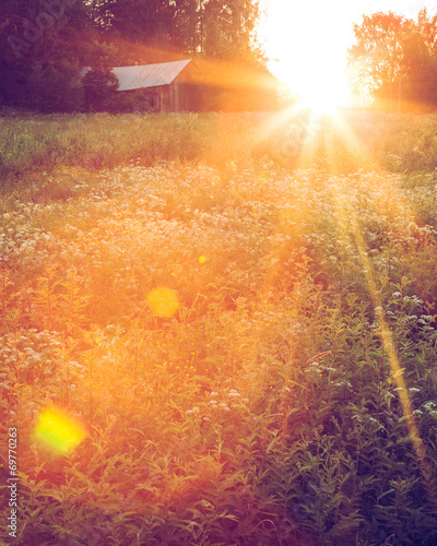 Meadow landscape at sunset
