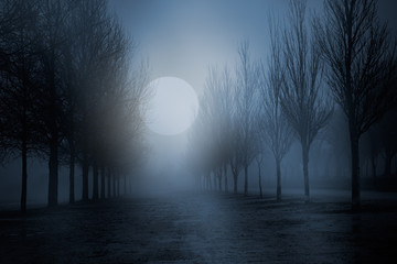 Foggy full moon night