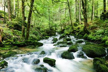 Obraz na PlexiWasserfall im Wald