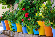 Flowers In Colorful Pots