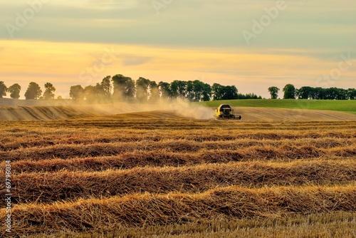 Fototapeta Krajobraz wiejski, żniwa obraz