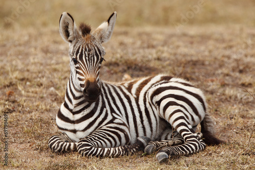 Photo Stands Zebra Baby Zebra