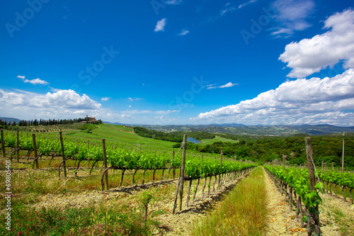 Papiers peints Vignoble Beautiful rows of grapes before harvesting