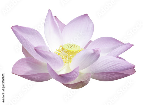 Lotus flower Lotus isolated with clipping path.