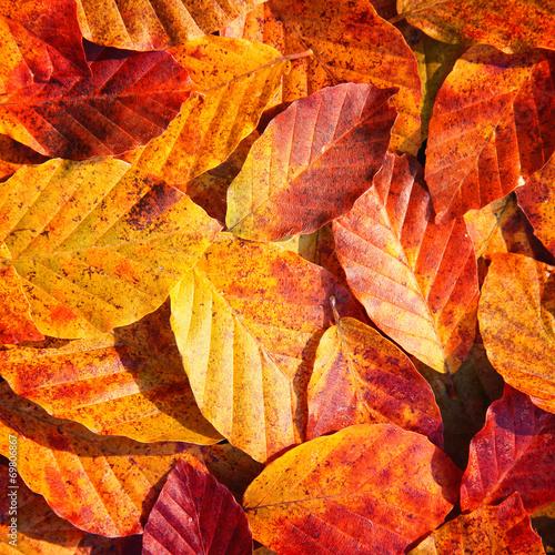 Photo  Autumn colorful leaf background