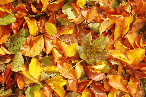 Photo  Autumn leaves background