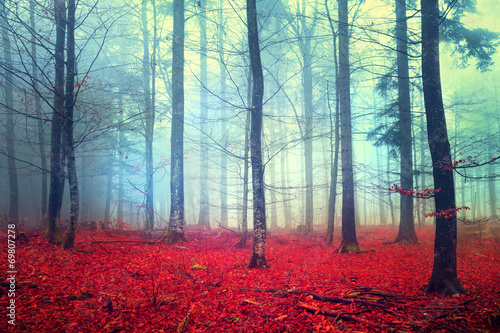 Foto op Canvas Herfst Fantasy autumn forest scene