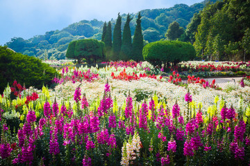 FototapetaFlower Garden