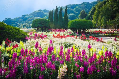 plakat Flower Garden