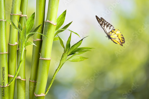 Foto op Aluminium Vlinders in Grunge Butterfly with Bamboo