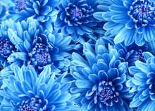 Beautiful Blue Flowers, Close-up