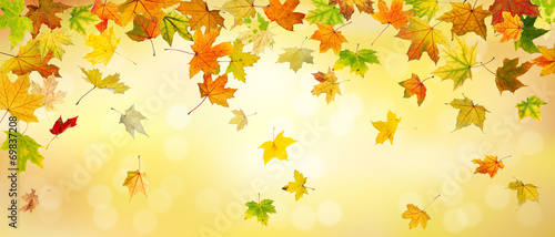 Foto auf AluDibond Herbst Panoramic view of autumn maple leaves falling down